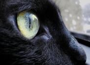 gato_negro_por_que_da_mala_suerte_supersticion