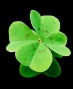 trebol_cuatro_hojas_buena_suerte