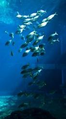 peces_mar