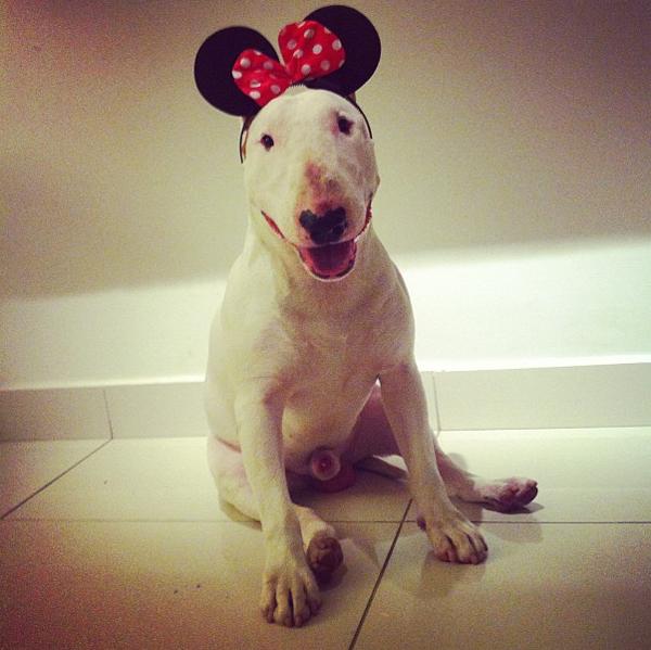 rafael_mantesso_fotos_perro_instagram_2