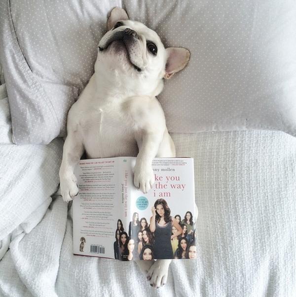 mascotas_famosas_instagram_perro_barkleysircharles_2