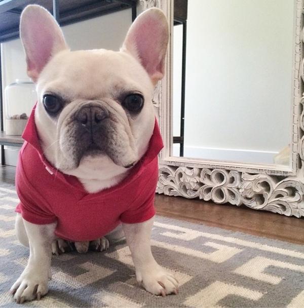 mascotas_famosas_instagram_perro_barkleysircharles_3