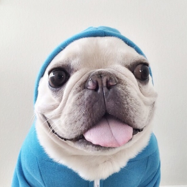 mascotas_famosas_instagram_perro_barkleysircharles_4