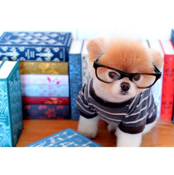 mascotas_famosas_instagram_perro_buddyboowaggytails_4