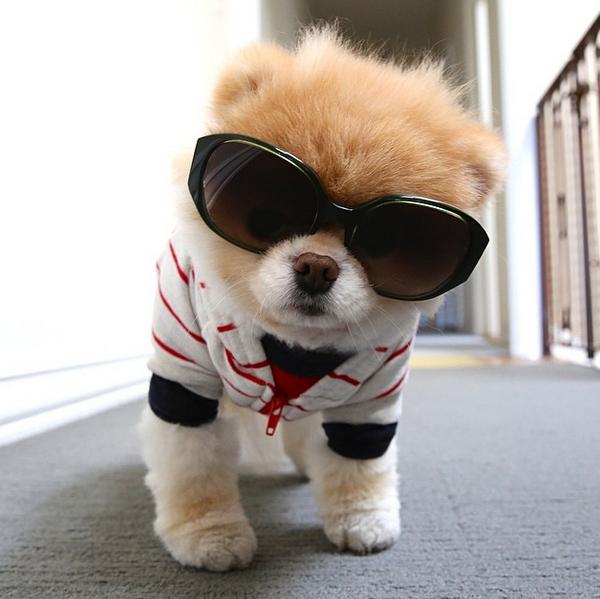 mascotas_famosas_instagram_perro_buddyboowaggytails_8