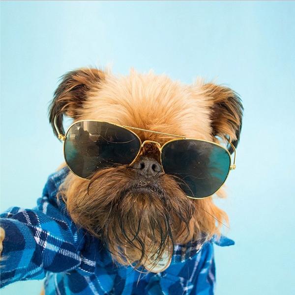 mascotas_famosas_instagram_perro_digbyvanwinkle_5