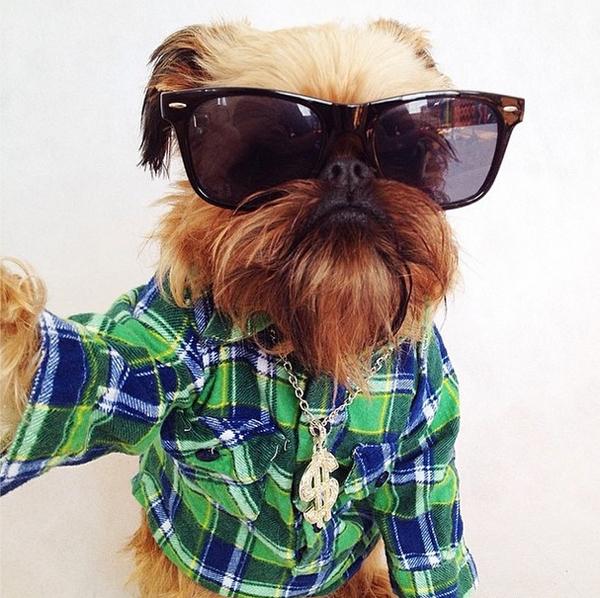mascotas_famosas_instagram_perro_digbyvanwinkle_6