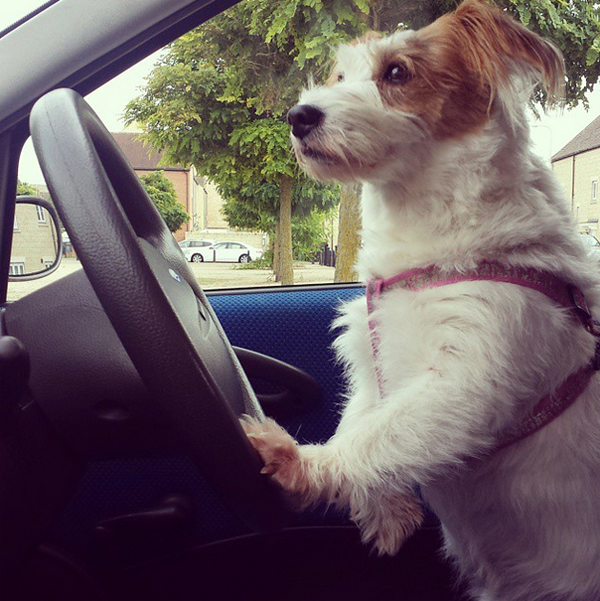 mascotas_famosas_instagram_perro_ginny_jrt_3