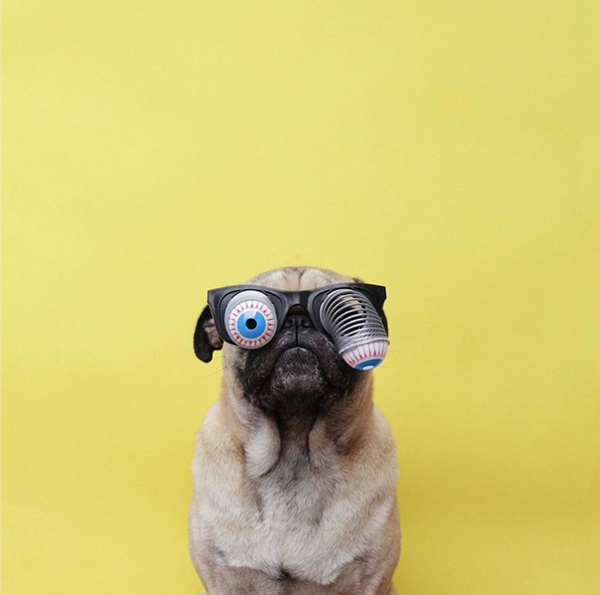 mascotas_famosas_instagram_perro_jermzlee_4