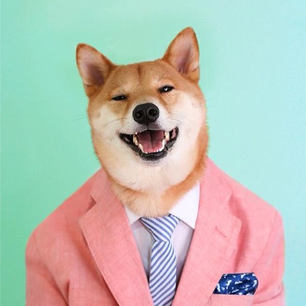 mascotas_famosas_instagram_perro_mensweardog_1