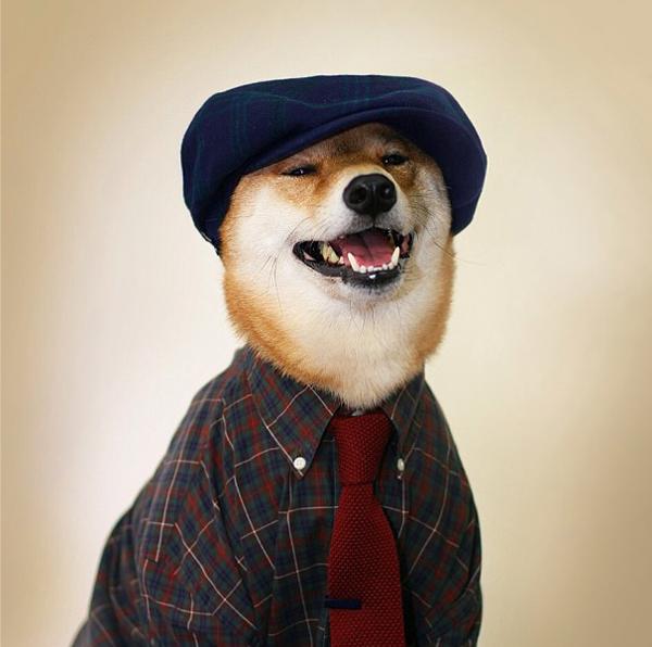 mascotas_famosas_instagram_perro_mensweardog_12