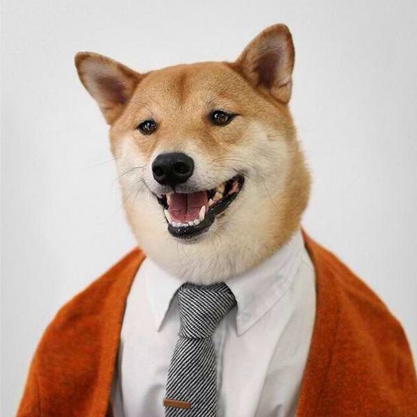 mascotas_famosas_instagram_perro_mensweardog_13