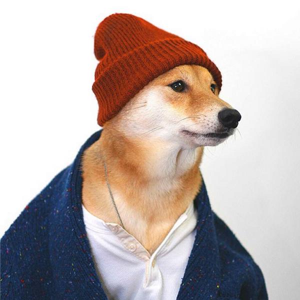 mascotas_famosas_instagram_perro_mensweardog_14