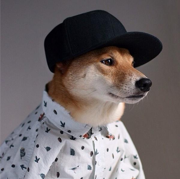 mascotas_famosas_instagram_perro_mensweardog_15