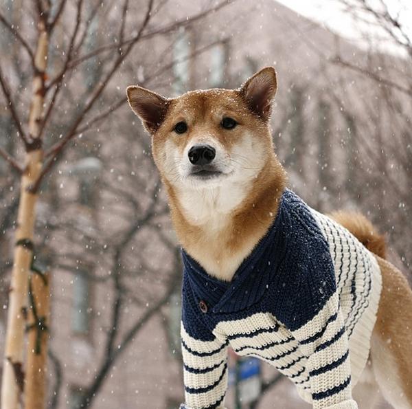 mascotas_famosas_instagram_perro_mensweardog_16