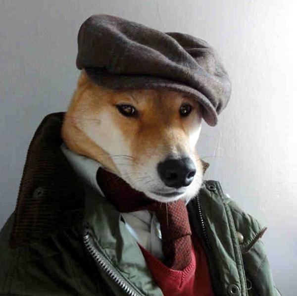 mascotas_famosas_instagram_perro_mensweardog_18
