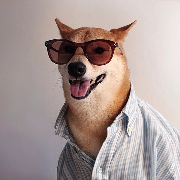 mascotas_famosas_instagram_perro_mensweardog_19