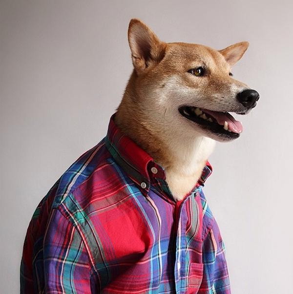 mascotas_famosas_instagram_perro_mensweardog_20