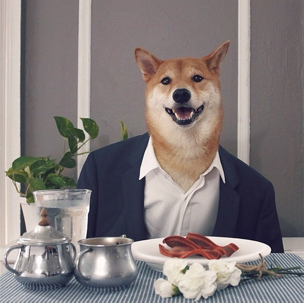 mascotas_famosas_instagram_perro_mensweardog_21