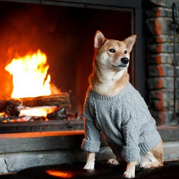 mascotas_famosas_instagram_perro_mensweardog_24