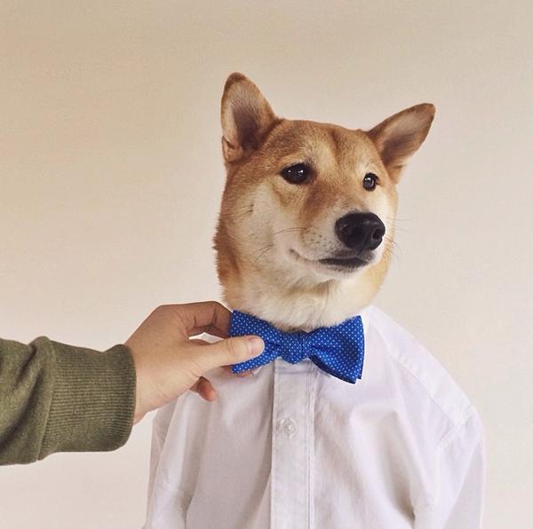 mascotas_famosas_instagram_perro_mensweardog_25