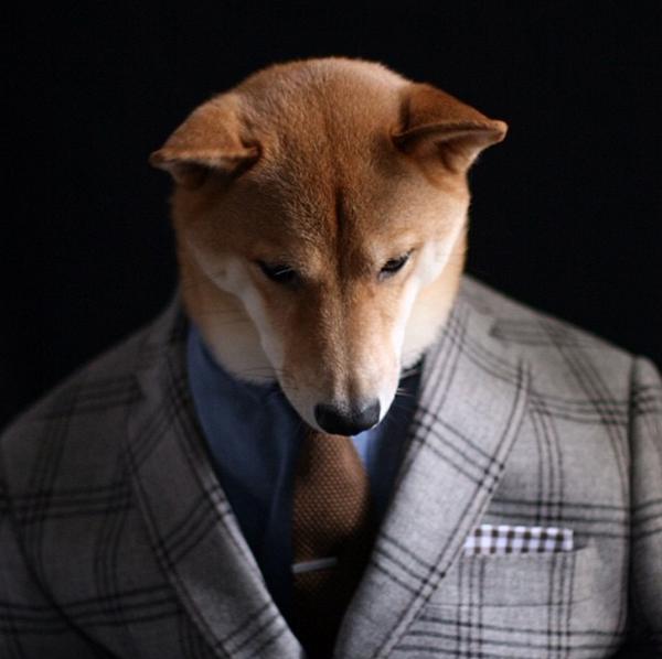 mascotas_famosas_instagram_perro_mensweardog_26
