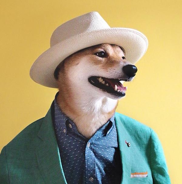 mascotas_famosas_instagram_perro_mensweardog_27
