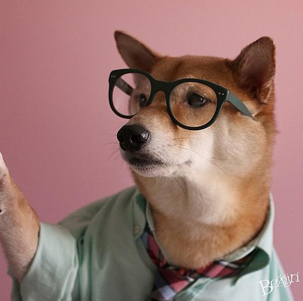 mascotas_famosas_instagram_perro_mensweardog_28
