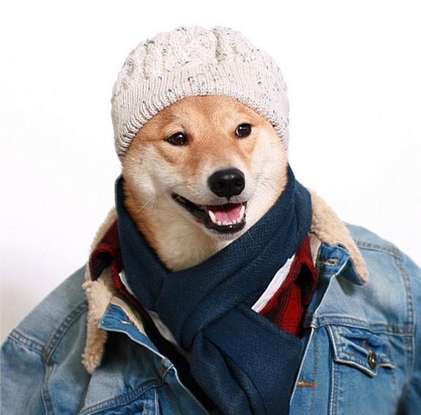 mascotas_famosas_instagram_perro_mensweardog_29