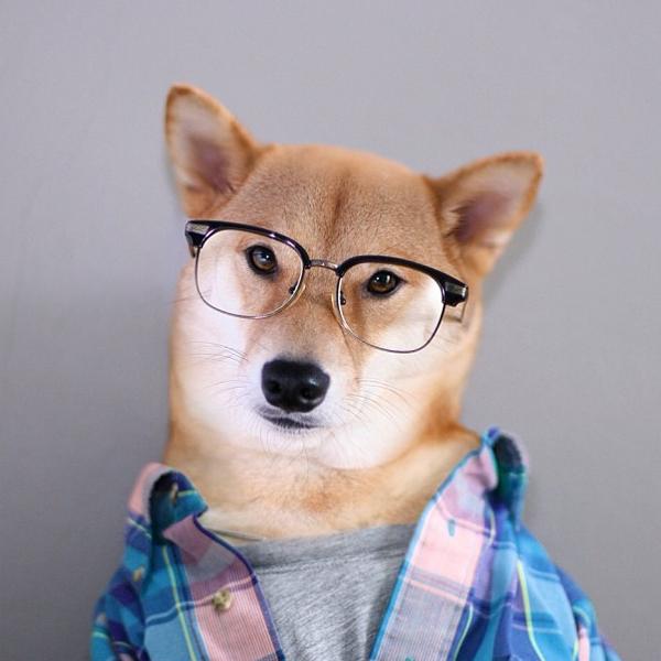 mascotas_famosas_instagram_perro_mensweardog_3