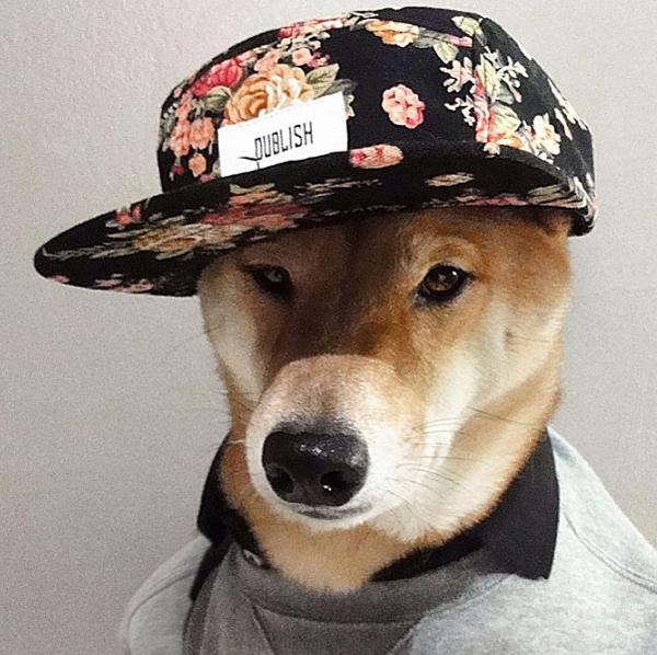 mascotas_famosas_instagram_perro_mensweardog_4