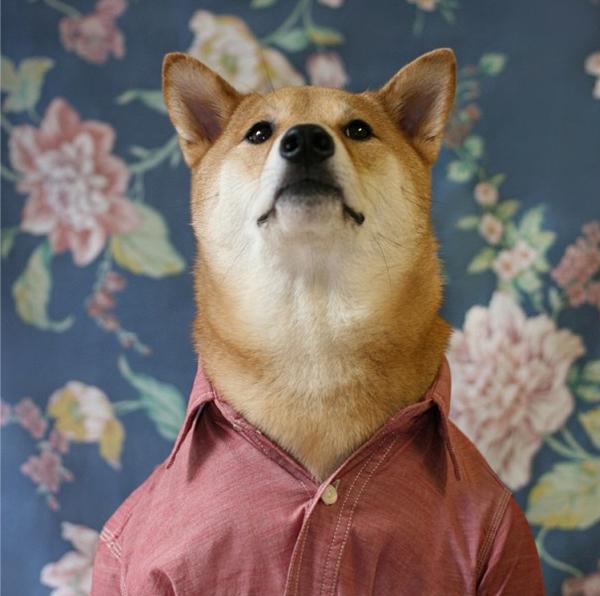mascotas_famosas_instagram_perro_mensweardog_8