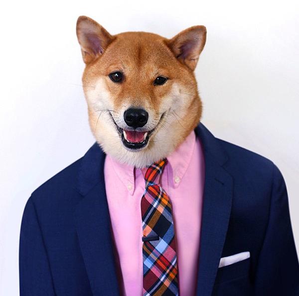 mascotas_famosas_instagram_perro_mensweardog_9