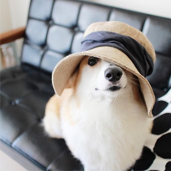 mascotas_famosas_instagram_perro_ninawanco