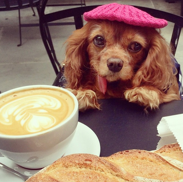 mascotas_famosas_instagram_perro_toastmeetsworld_2