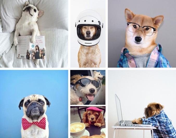 perros_famosos_instagram